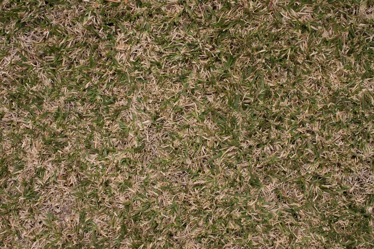 how to grow grass in dry dirt
