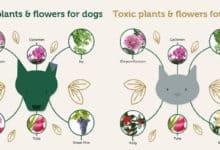 Pet friendly plants